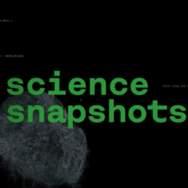 Science snapshot: navegar mundos virtuais