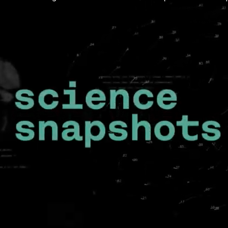 Science snapshot: Compreender o comportamento coletivo