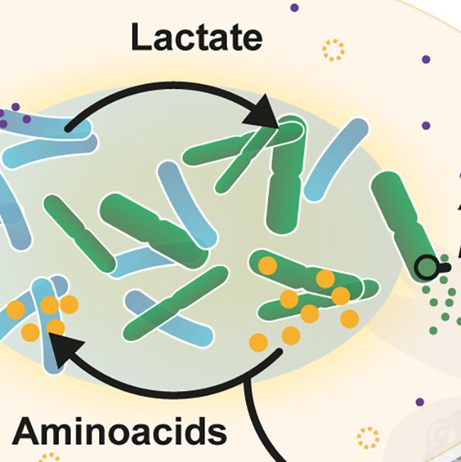No microbioma, juntos são mais fortes