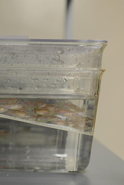 Fish Platform